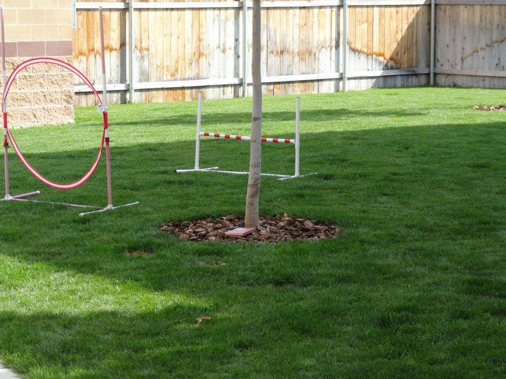 Yard, Excercise Obstacles